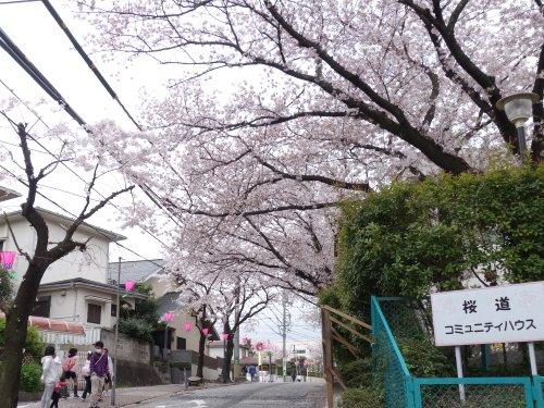 桜道の2015年「港南桜まつり」開催中!
